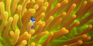 Finding Dory Trailer Review